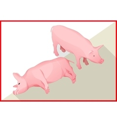 Pig isometric flat 3d vector