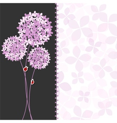Springtime purple pink hydrangea flower vector
