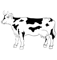 Cow isolated on a white background vector