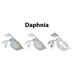 doodle character for daphnia vector image