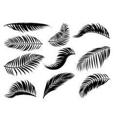 Palm leaf silhouette vector