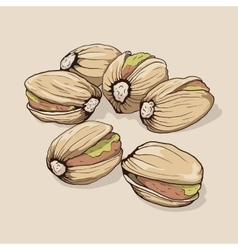 Pistachios hand drawn vector