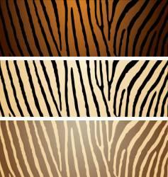 zebra variation vector image