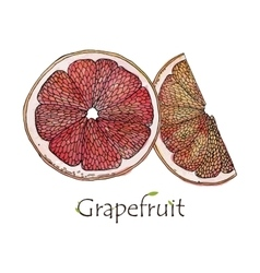 Red grapefruit traced vector