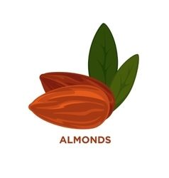 Almond nut cartoon vector