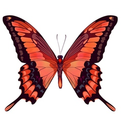 beautiful isolated red butterfly vector image