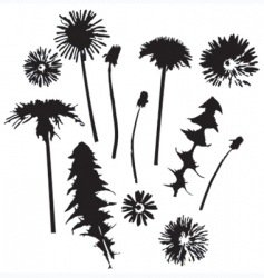 dandelion silhouettes vector image vector image