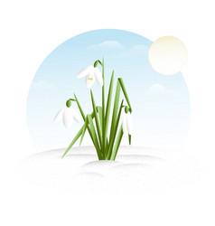 Snowdrop - minimalistic flat design vector
