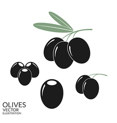 Black olives set vector