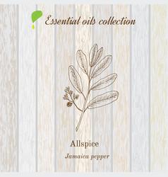 Jamaica pepper essential oil label aromatic vector