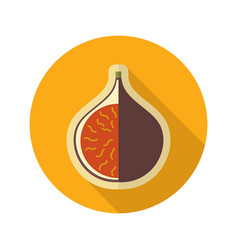 Fig flat icon tropical fruit vector