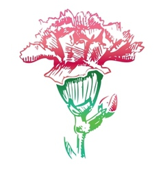 Pink carnation flower sketch icon vector