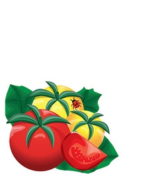 Yellow and red fresh tomatoes vector