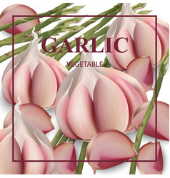 garlic card background realistic detailed vector image vector image