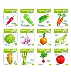 Vegetable food on card or sale tag labels vector