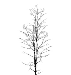 Leafless tree vector image