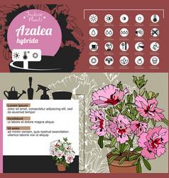 Template for indoor plant azalea tipical flowers vector