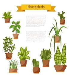 Set of house plant isolated vector