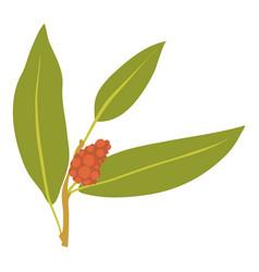Juniper berry icon cartoon style vector