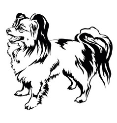 decorative standing portrait of dog papillon vector image vector image