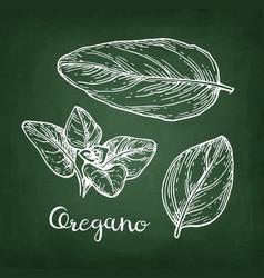 Oregano chalk sketch vector