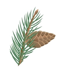Pine branch with cone in flat design vector