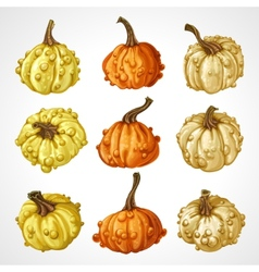 Big set of pumpkins different colors isolated on vector
