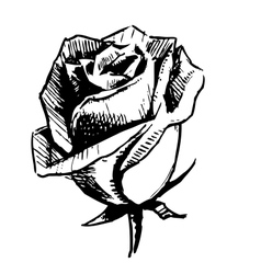Rose bud sketch vector