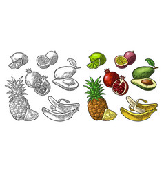 Set tropical fruits pineapple lime banana vector