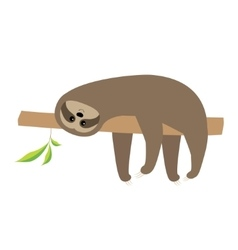 Sloth lying on tree branch cute cartoon character vector