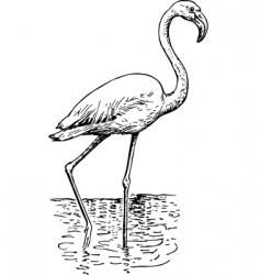 Flamingo phoenicopteri vector