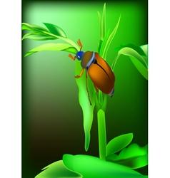 May bug vector image vector image