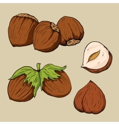 Hazelnuts in hand-drawn style vector image vector image