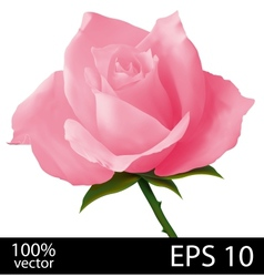 Pink rose realistic vector
