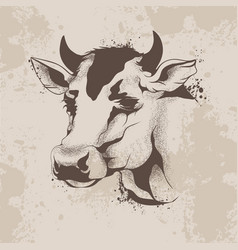 graphic ink drawing sketch the head of a cow vector image