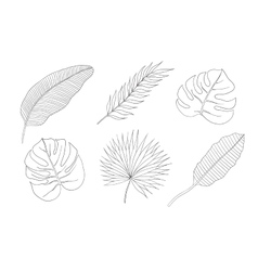 Set of leaves different species palm trees vector