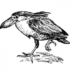 Boatbilled heron vector