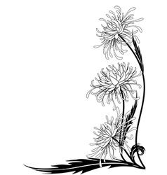 flower of chrysanthemum vector image