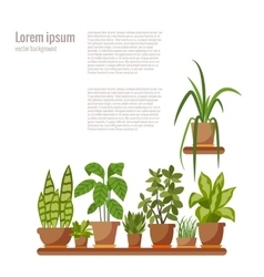 Set of indoor plant isolated vector