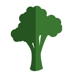 Whole broccoli icon vector