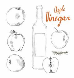 Apple cider vinegar vector