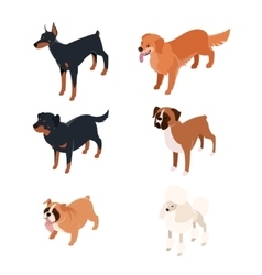 Collection of isometric dogs1 vector image vector image