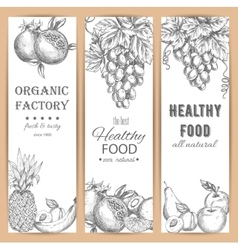 Garden fruit banners agriculture sketch vector