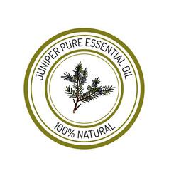 Juniper essential oil label aromatic plant vector