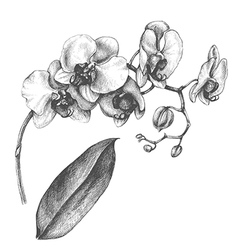 Orchid on white vector