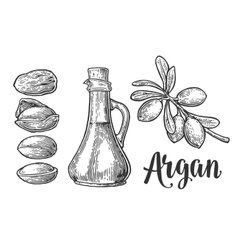Set of argan branches leaves nuts for packing vector