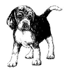 Beagle bw vector