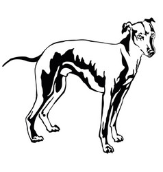 Decorative standing portrait of dog whippet vector