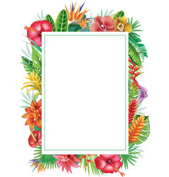 frame from tropical plants vector image vector image