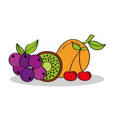 mango grapes kiwi cherry fruits nutrition vector image